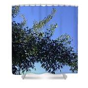Skies Grass  Shower Curtain