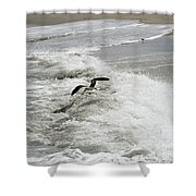 Skimmer And Waves Shower Curtain