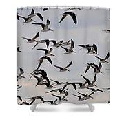 Skimmer Sky Shower Curtain