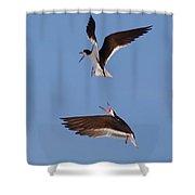 Skimmers In Flight Shower Curtain