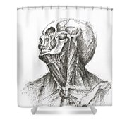 Skinless Shower Curtain