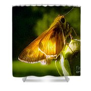 Skipper Butterfly Basking In Sun Shower Curtain