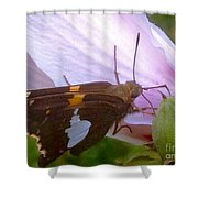 Skipper Butterfly With White And Orange Colors Shower Curtain