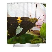 Skipper  Shower Curtain