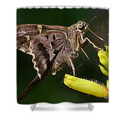 Skipper Delight Shower Curtain