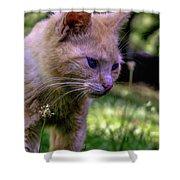 Skippy Feral Cat Portrait 0369b Shower Curtain