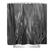 Skn 2913 Yet To Collect The Yield Color Shower Curtain