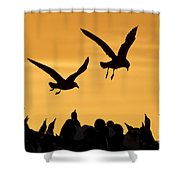 Skuas And Penguins Shower Curtain