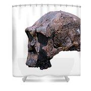 Skull Of Homo Erectus Shower Curtain