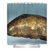 Skull Of Java Man Shower Curtain