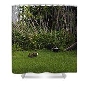 Skunk And Rabbit Surprise Shower Curtain