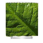 Skunk Cabbage Leaf Shower Curtain