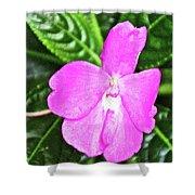 Sky Flower In Huntington Botanical Gardens In San Marino-california  Shower Curtain