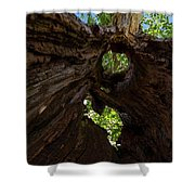 Sky View Through A Hollow Tree Trunk Shower Curtain