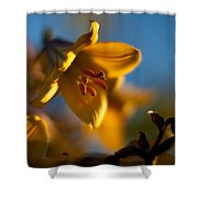 Skylit Lily Shower Curtain