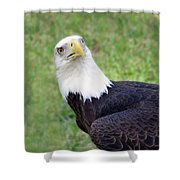 Skyward Eagle Shower Curtain