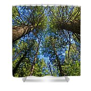 Skyward Shower Curtain by Gary Lengyel