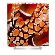 Slate Pencil Urchin Shower Curtain
