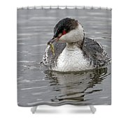Slavonian Grebe With Fish Shower Curtain