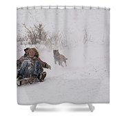 Sled Before The Dogs? Shower Curtain