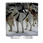 Sledge Dogs H A Shower Curtain