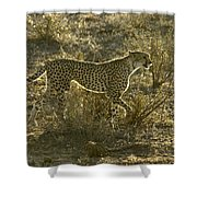 Sleek And Spotted Shower Curtain