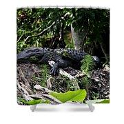 Sleeping Alligator Shower Curtain