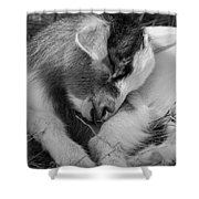 Sleeping Baby, Black And White Shower Curtain