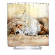 Sleeping Beauty -red Fox In Rest Shower Curtain