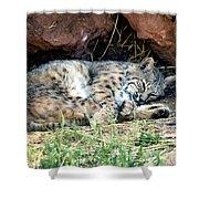 Sleeping Bobcat Shower Curtain