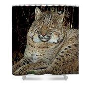 Sleepy Bobcat Shower Curtain