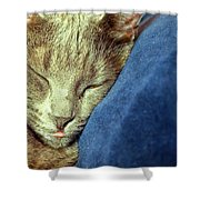 Sleeping Cat Shower Curtain