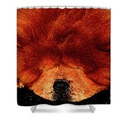 Sleeping Chow Chow Shower Curtain