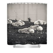 Sleeping Cygnets Shower Curtain