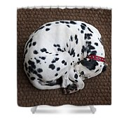 Sleeping Dalmatian II Shower Curtain