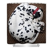 Sleeping Dalmatian Shower Curtain