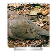 Sleeping Dove Shower Curtain