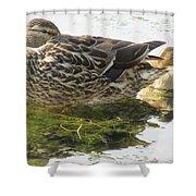 Sleeping Ducks. Shower Curtain