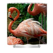 Sleeping Flamingo Shower Curtain