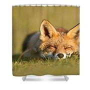 Sleeping Fox Kit Shower Curtain