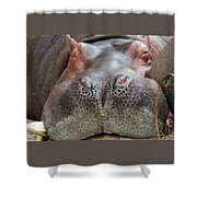 Sleeping Hippo Shower Curtain