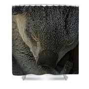 Sleeping Koala Bear Shower Curtain