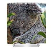 Sleeping Koala - Canberra - Australia Shower Curtain