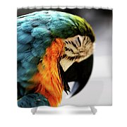 Sleeping Macaw Shower Curtain