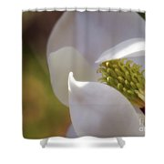 Sleeping Magnolia Shower Curtain