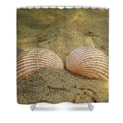 Sleeping Mermaid Shower Curtain