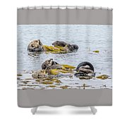 Sleeping Otters Shower Curtain