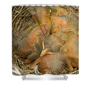 Sleeping Robins Shower Curtain