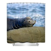 Sleeping Sea Lion Shower Curtain