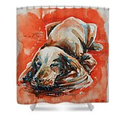 Sleeping Spaniel On The Red Carpet Shower Curtain